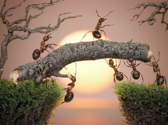 karınca_kapak